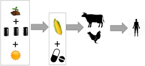 Industrial Food process